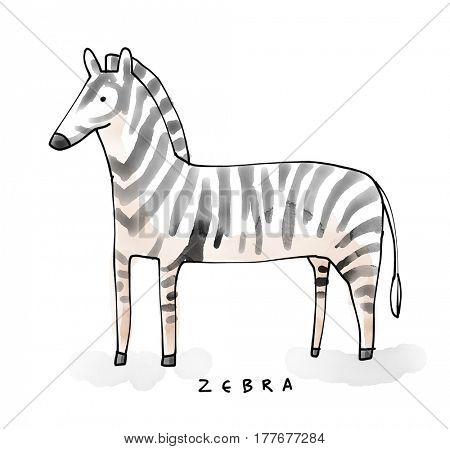 Zebra Watecolor Animal illustration set