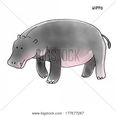 Hippo Watecolor Animal illustration set