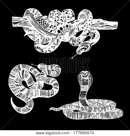 Cute Animals Snake. Cute funny snake. T-shirt Typography Graphics, Illustration.