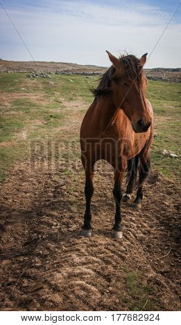 Full face portrait of a browm stand alone horse