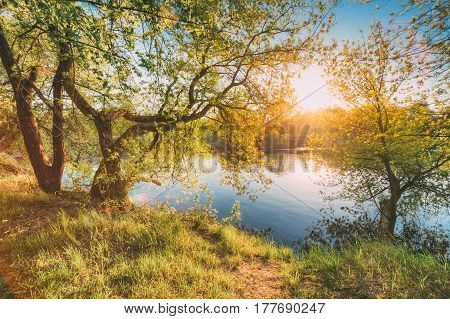 Sun Shining Through Branch And Foliage Of Tree Near River Or Lake At Spring Sunset Or Sunrise. Summer Landscape In Sunny Day. Nobody. Deciduous Forest Nature