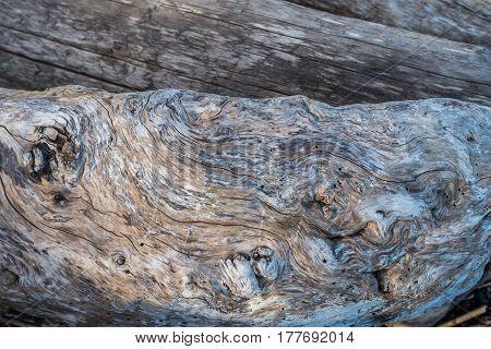 A closeup shot of a warped driftwood log.
