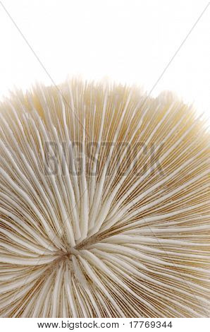 background texture of the sea coral