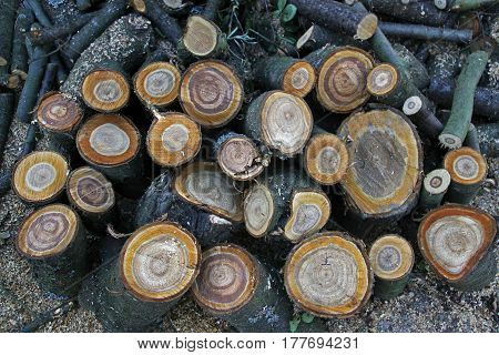 Pile of irregularly stacked pieces of firewood in the garden