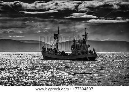 Whale watching boat on the water in Husavik Iceland