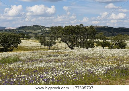 Spring Landscape Of Alentejo Landscape Between The Village Of Redondo And Vila Vicosa, Alentejo Regi