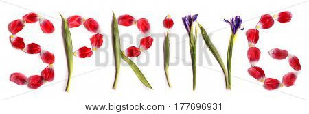 Title Spring from beauteous pink tulips and iris on a white background