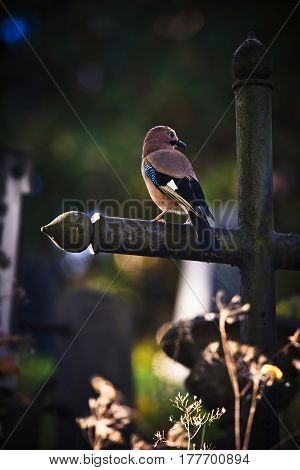 Bird sitting on a cross in a graveyard. Conceptual image about eternity reincarnation and life after death.