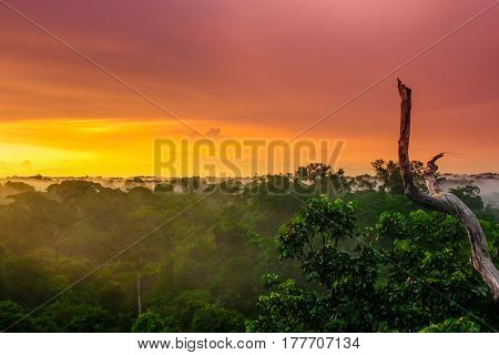 view on sunset over the trees in the brazilian rainforest of Amazonas