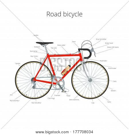 Road bicycle infographic elements and parts isolated on white.