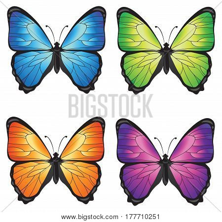 Bright isolated vector butterflies in four colors. Realistic picture.