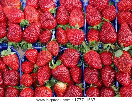 Red Strawberries Grown Using The Techniques Of Organic Farming