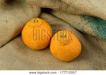 Two whole seedless dekopon mandarin oranges on burlap