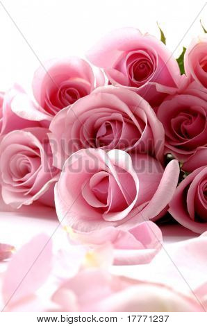 Bouquet rose, petals on white background