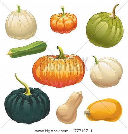 Pumpkins and squashes. Set of different kinds of pumpkins and squashes