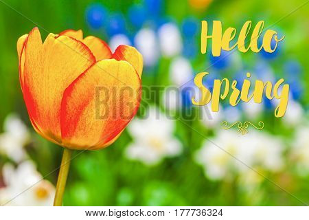 hello Spring text sign against a dreamy soft spring garden.