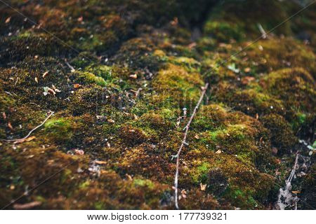 Background of an old tree covered with green and brown moss, macro photo with Shallow depth of field