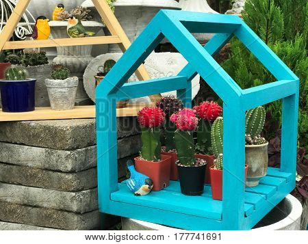 Colorful cactus in blue wooden house - garden decoration