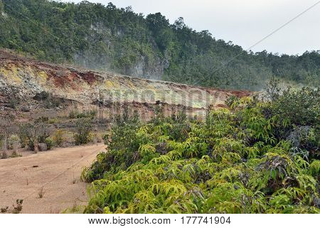 Trail Through The Sulphur Vents In Volcanoes National Park, Big Island Of Hawaii