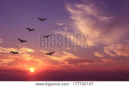 Seasonal spring or autumn migration of birds over purple sunset