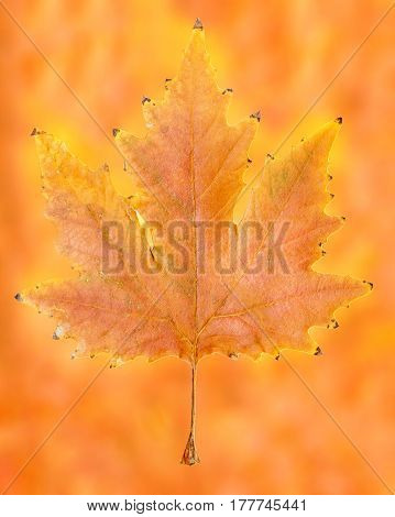 autumn leaf on abstract background