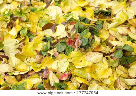 leaves of autumn as background