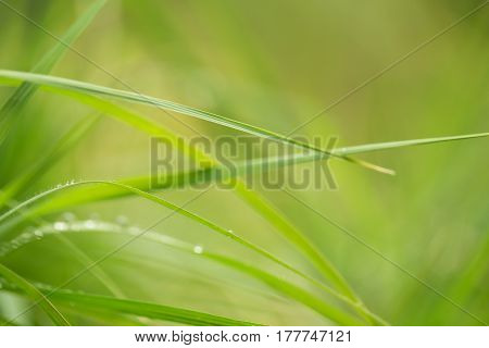 water drops on grass in nature. macro