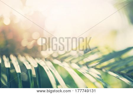Tropical Background Palm Trees Branches Sun Light