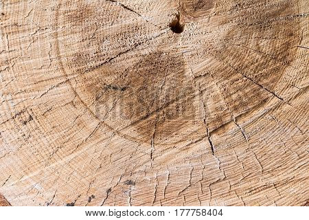 Old tree stump texture background. Close-up of cross section of a tree stump with patterns of arcs, circles and cracks