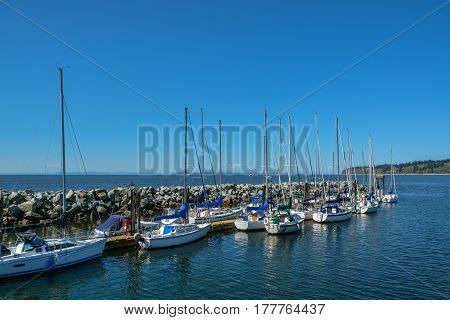 Sailing boats yachts at mooring line on Pacific ocean. Landscape of marine regatta floating in the harbor