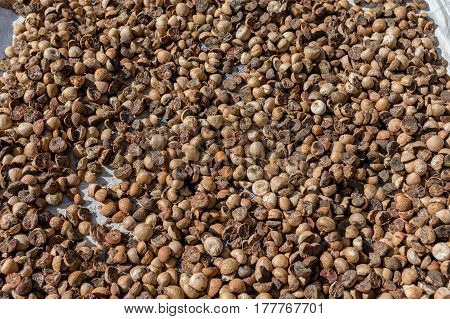 Betel palm nut drying out in the street in the midday sun.