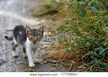 Cute stray kitten cat on mud path next to tall grass verge with depth of field and room for text.
