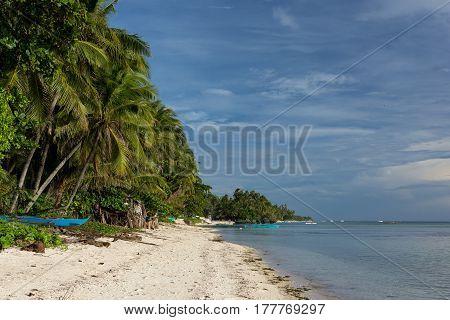 Beautiful Palm Tree Lined White Sand Beach