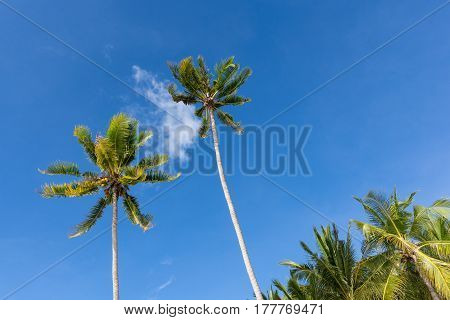 Two tall palm trees tower up in to a beautiful blue sky with one small cloud between them.
