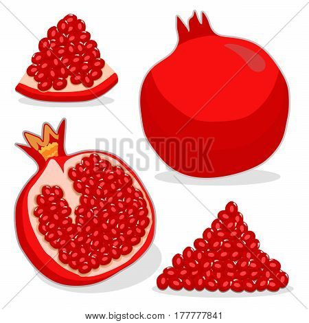 Vector illustration logo for whole ripe fruit red pomegranate,cut half sliced garnet on background.