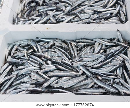 detail of anchovies at market in italy