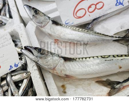 detail of Fresh horse mackerel in a market