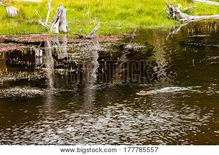 beaver national park tierra del fuego patagonia