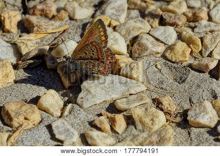 An insect with wings on the sand with pebbles under the bright rays of the sun