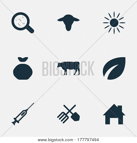 Vector Illustration Set Of Simple Harvest Icons. Elements Syringe, Virus, Sunshine And Other Synonyms Leaves, Holdall And Sack.