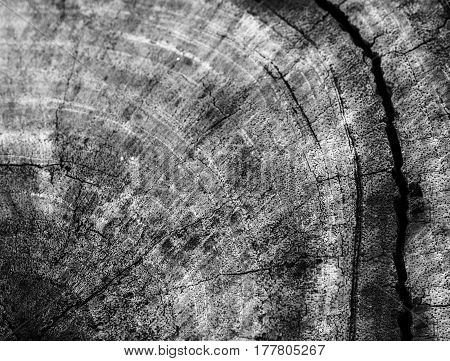 High contrast monochrome image of wood log showing age rings background