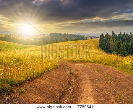 forest in mountain rural area. green agricultural field on a hillside. beautiful summer scenery at sunset
