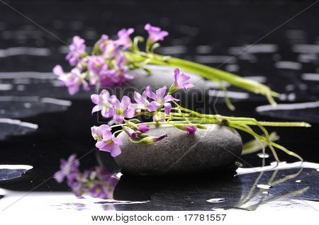 Still life with flower on black pebble