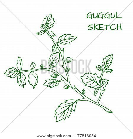 Guggul hand drawn VECTOR outline sketch, green contour. isolated on white