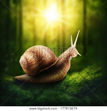 Snail in a dark forest