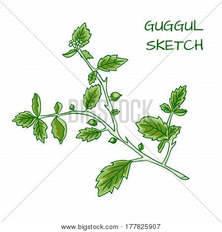 Guggul hand drawn VECTOR colorful sketch isolated on whtie