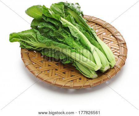 japanese takana, brassica juncea var. integrifolia