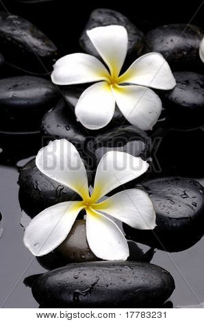 stones and white flower with petal on water drops