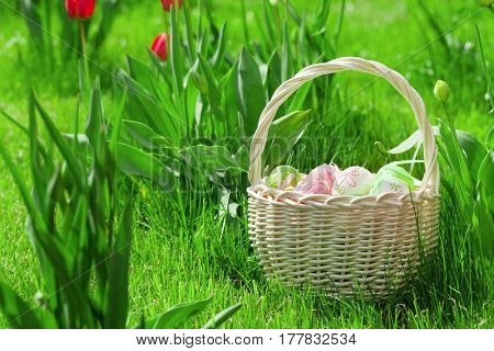 Easter eggs basket on meadow grass with tulip flowers