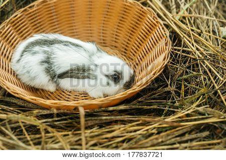 Cute Rabbit Bunny Sitting In Wicker Bowl